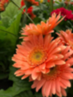 flowers b.jpg