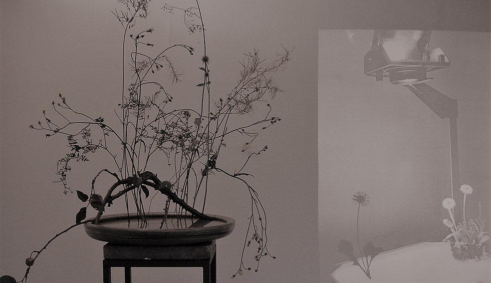 Flowers, Ikebana, Florist, Weddings, Events, South Yarra