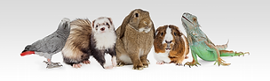 Specialist Veterinary Services