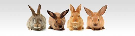 rabbits_large.png