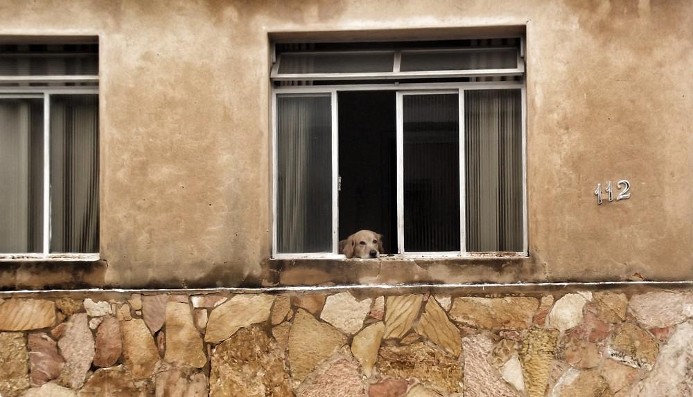 Fotografia de rua de uma casa com muso de pedras e paredes cor de areia, um cachorro apoia a cabeça em uma janela olhando para o movimento que passa.