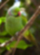 echo parrot.jpg