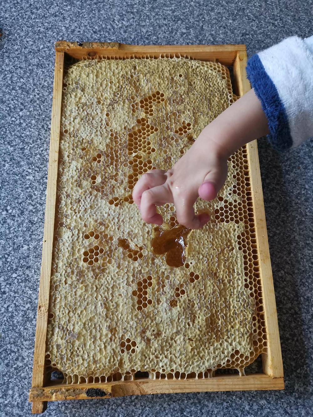 Bienenwaben, Heuschnupfen, Api-Therapie, Wabenhonig, Honig, Katharina rührt