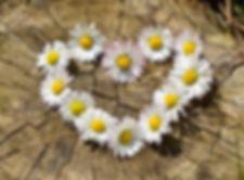Gänseblümchen, Gänseblümchencreme selber machen