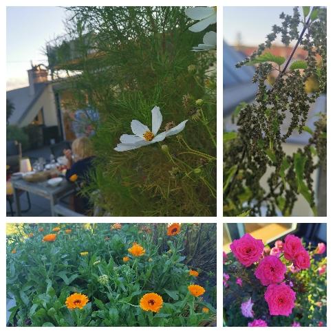 Hallo Herbst, Meine Terrasse im September, Katharina rührt