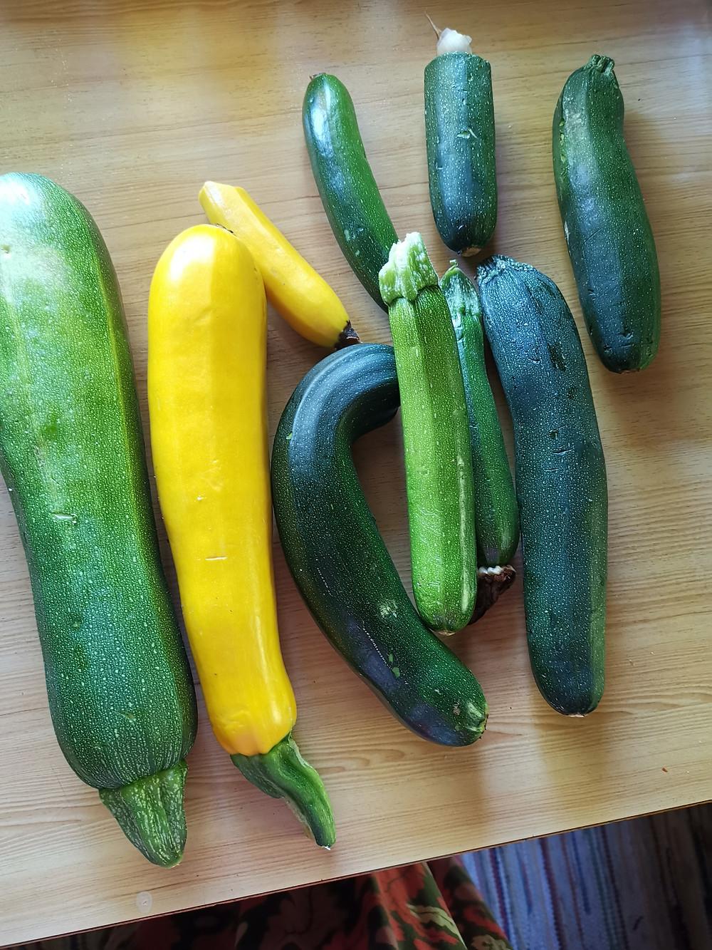 Zucchinipasta, Zucchinischwemme, Nudeln mit Zucchinisoße