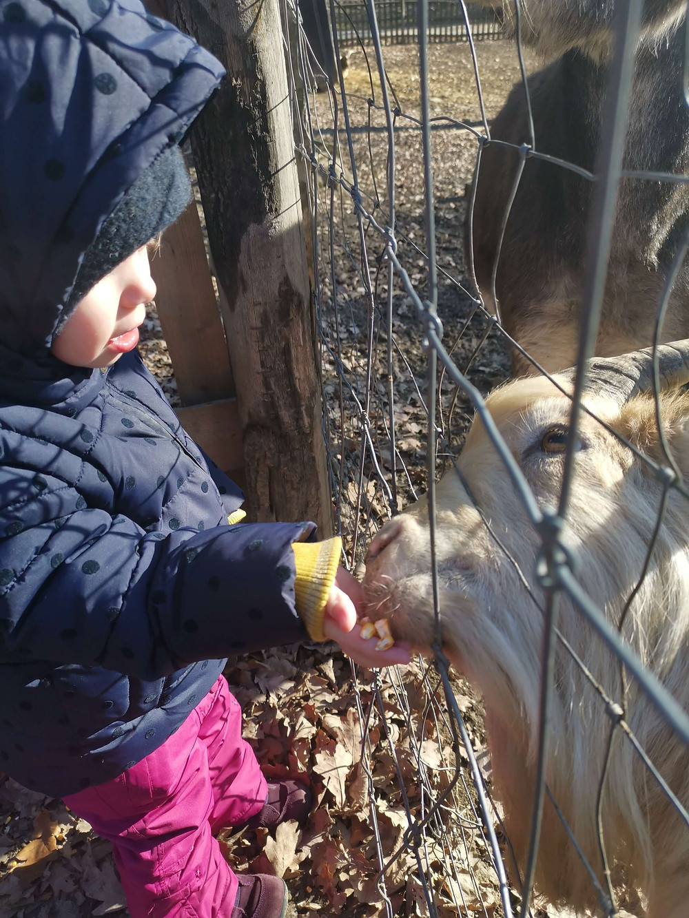 Katharina rührt, neue Kurse, Tierpark Ernstbrunn, Wildpark Ernstbrunn, Wegweiser neues Jahr
