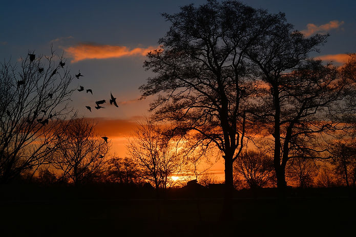 sunrise-274257_1920.jpg