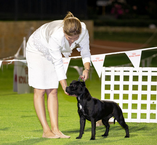 Raven Western Classic 2019 - Puppy in Group