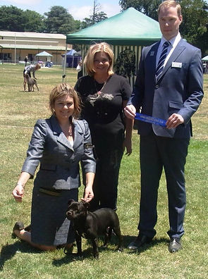 Thanks to Darren and Lorriane in VIC for allowing me to show Harley (International Judge)