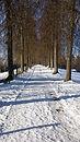 allée enneigée entourée d'arbres