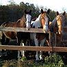 Crooked Creek Trails Horseback Riding
