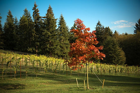 Dancing Fish Vineyards - a Winery on Whidbey Island