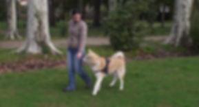 Education canine : marche en laisse en méthodes respectueuses de l'animal