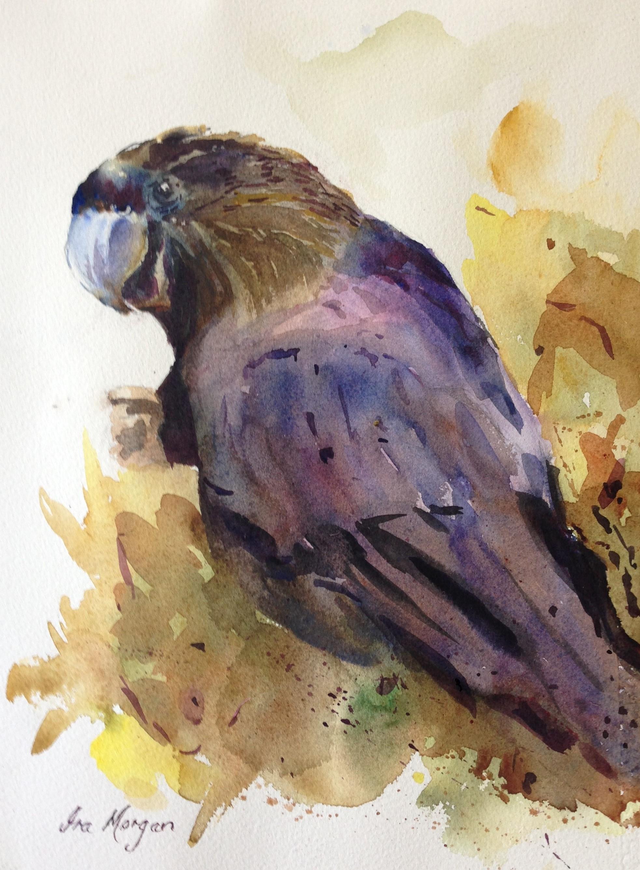 434. 'Black Cockatoo'