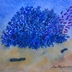 571. 'Blue Coral'