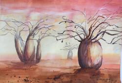 581. 'Boab Tree's 1'