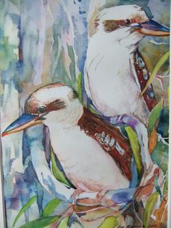 111. ' Blue-winged kookaburras'
