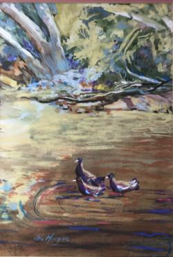 529. 'Water hens'