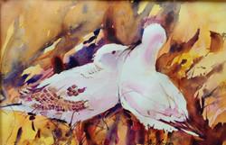 430. ' Nesting Gulls'