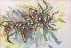 546. 'Gum Blossoms'