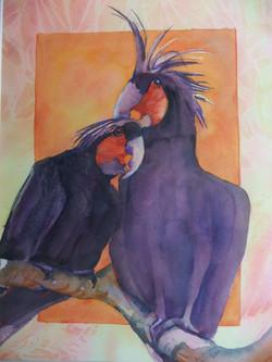 115 Palm Cockatoos