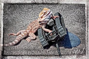 Lizard Man 6.jpg