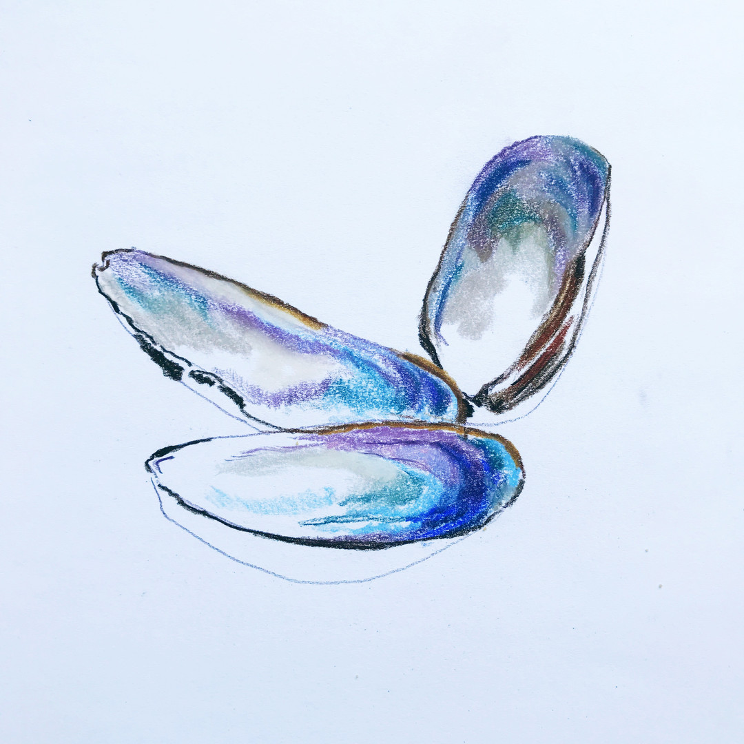 Shells by Renata Vinciprova