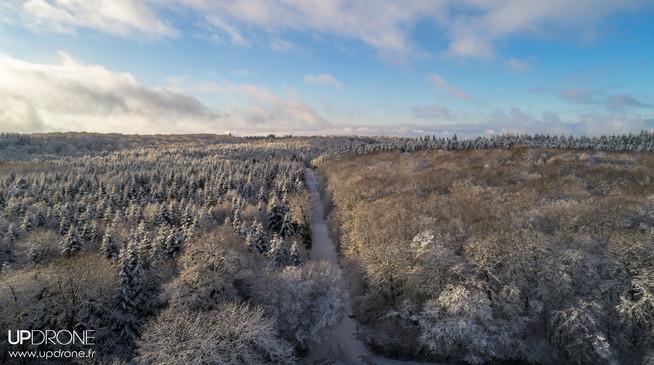 Forêt du Jura en hiver