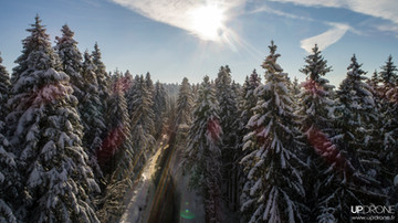 Forêt de Prénovel