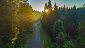 Soleil dans les arbres du Jura.jpg