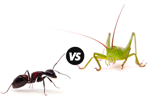 Ant or the Grasshopper? How to Prepare for This Winter