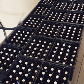 Chilli Beer Kisten