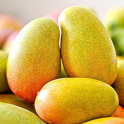 Grafted Mango  Per Pound