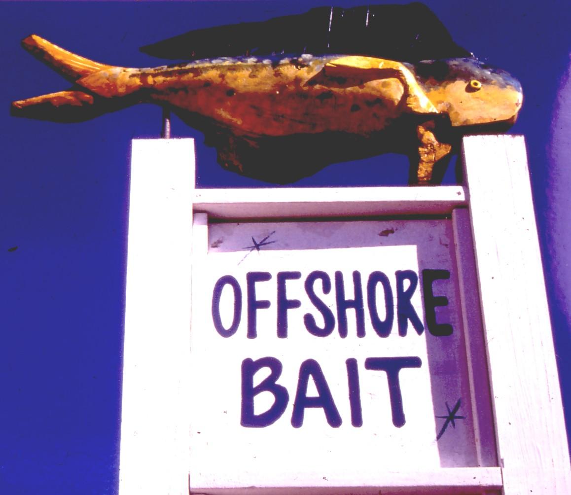 offshore bait