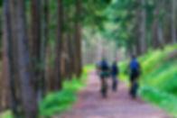 forest-4366094_1920.jpg