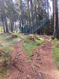 Single Trail Taunus.jpg