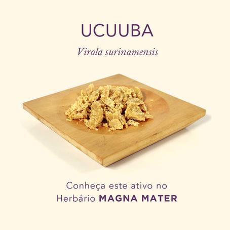 Ucuuba
