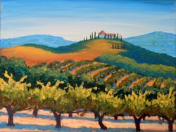 Vineyard With Villa