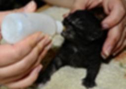 Apivet organisme de formation pour animalier avec formation au certificat de capacité animaux domestiques