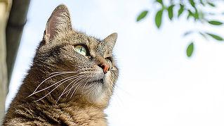 cat-686567_640.jpg