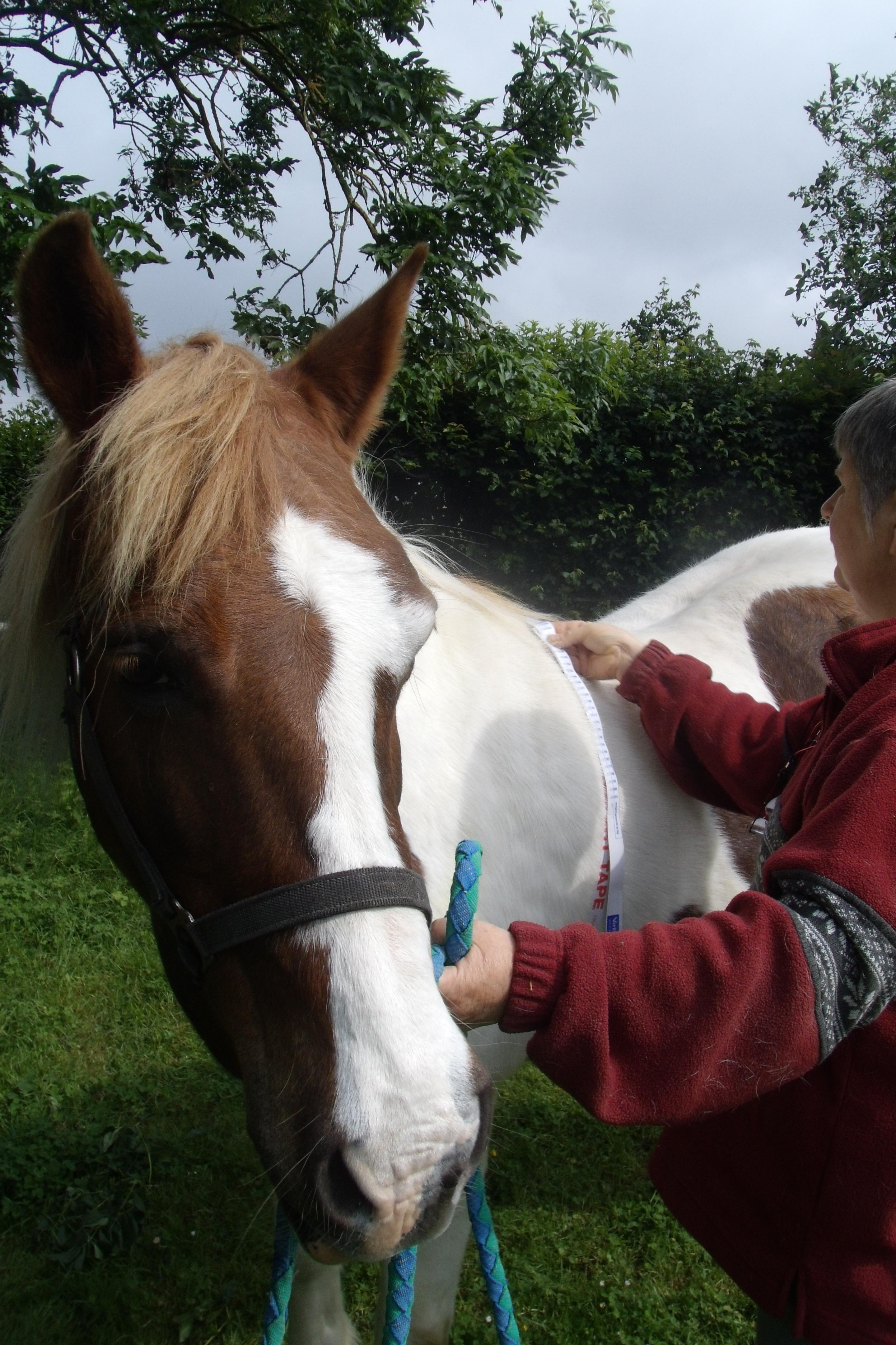 Apivet assistante vétérinaire équin