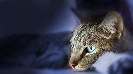 cat-431074_640.jpg