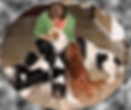Apivet organisme de formation pour animaliers avec la formation au certificat de capacité animaux domestiques