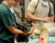 Apivet organisme de formation pour auxiliaire vétérinaire en canine, féline, équine et rurale