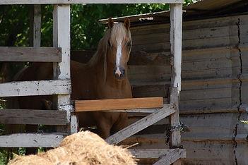 beautiful-horse-5253178_640.jpg