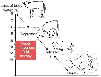 signes cliniques du veau déshydraté Apivet Formation