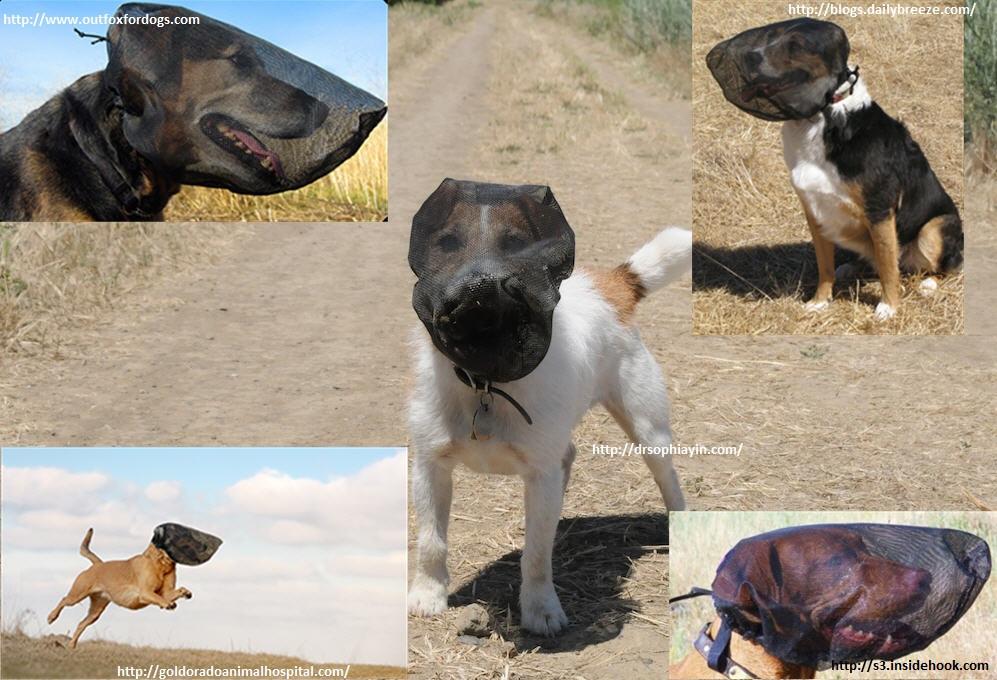 Apivet formation conseils soins quotidiens chien