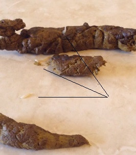 Dipylidium caninum sur les crottes du chien ou du chat Apivet formation