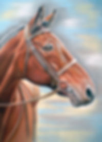 dark bay horse portrait pastels